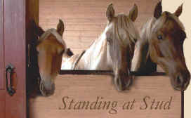 Rocky Mountain Horse / Kentucky Mountain Horse stallions at stud